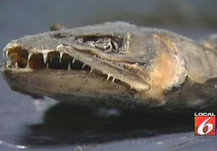 ユタ州でナゾのツチノコのような死骸見つかる