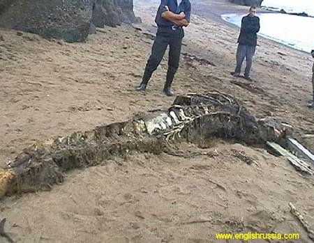 サハリンの海岸にナゾの怪物の死骸