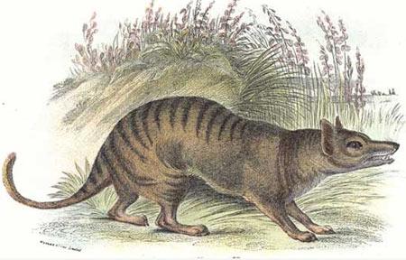絶滅したタスマニアタイガーを蘇らせる実験