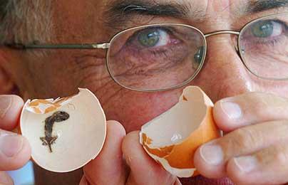 ニワトリの卵の中にヤモリがいた不思議