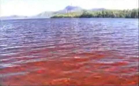 新種が続々発見される赤い海「バサースト湾」