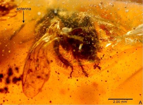 5000万年前の昆虫700種以上を発見