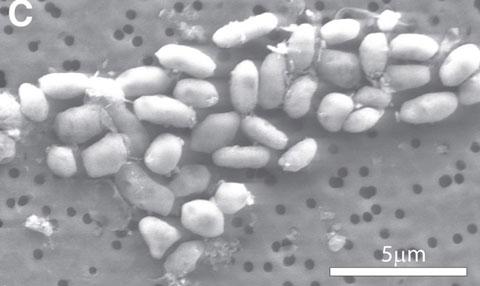 NASAの発表「砒素で生きる細菌を発見」の意味とは?