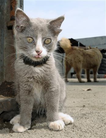 ロシアで4つの耳を持つネコが撮影される