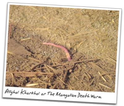 UMA「モンゴリアン・デス・ワーム」の存在はほぼ確定