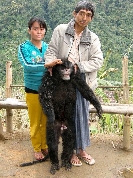 ミャンマーで発見された新種の猿