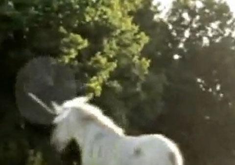 カナダで発表された伝説のユニコーン動画